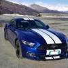 Mr.Mustang